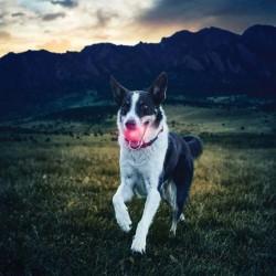 Svítící míček pro psy