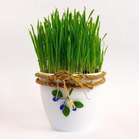 Velikonoční tráva k pohádkové zahradě